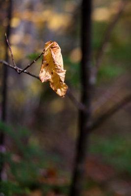 Last Brown Leaf #2
