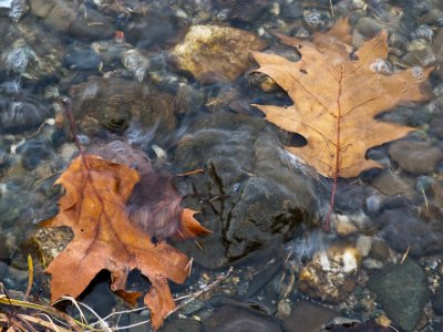 Leaves at the Waters Edge #2