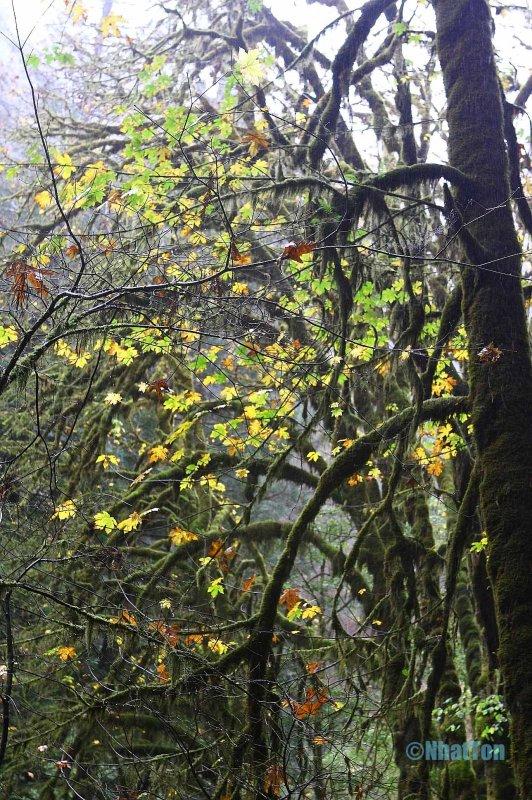 Redwood4.jpg