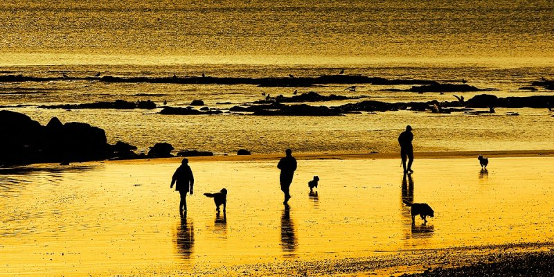 Walking the dogs, Sidmouth
