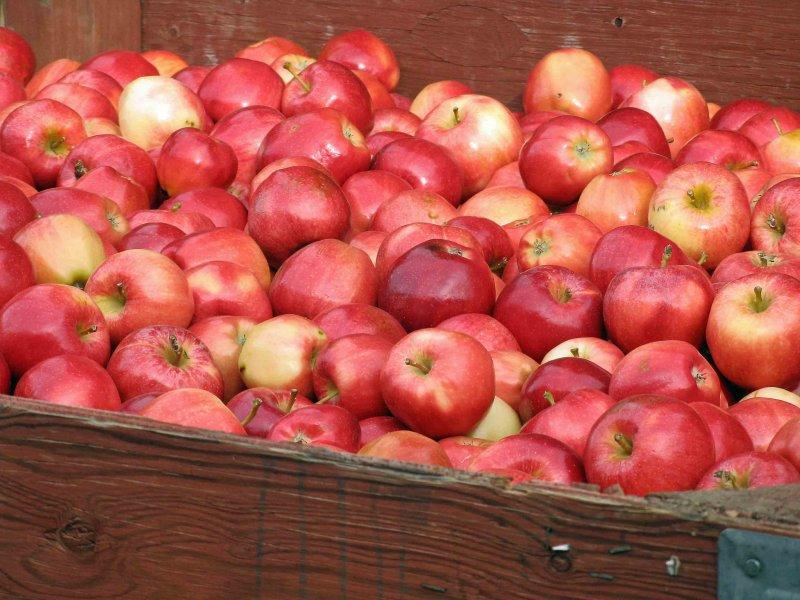 Harvest Time In Wenatchee Valley