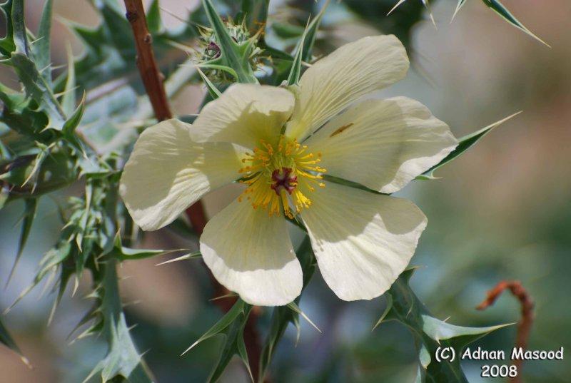 Flower - 057.JPG