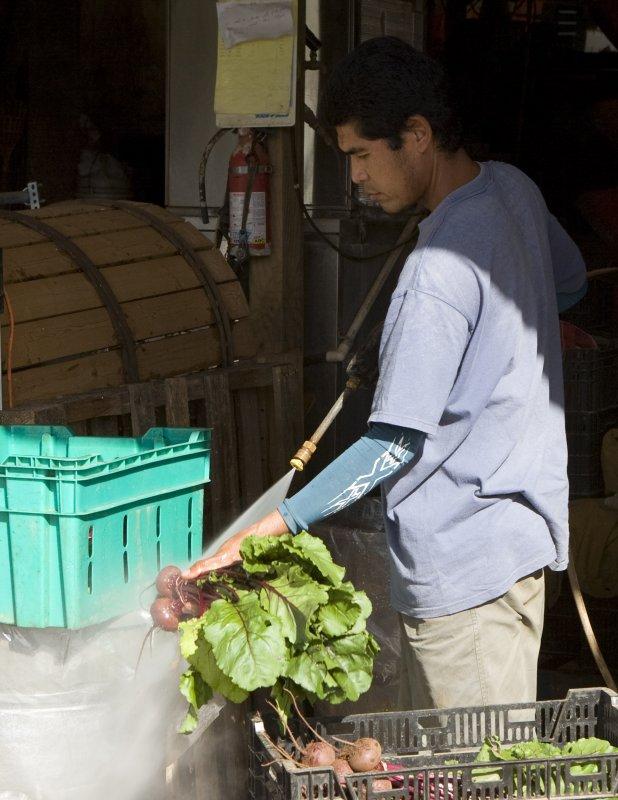 Juno washing beets.jpg