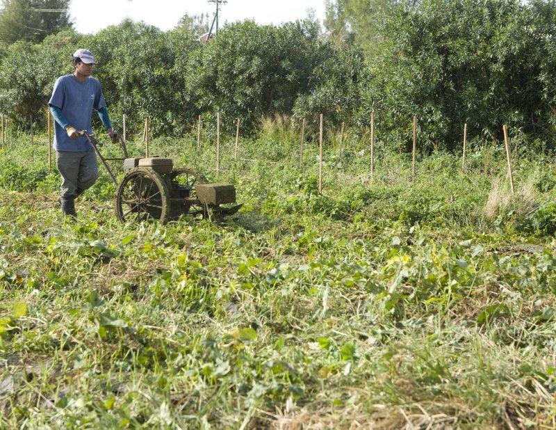 Preparing field.jpg