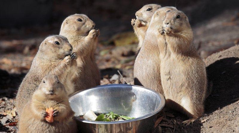 Chipmunks Feeding