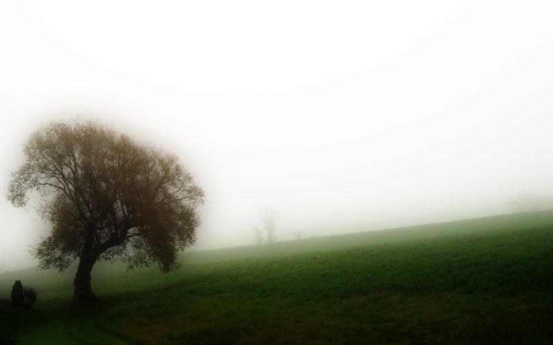 In Fog and Rain II ...