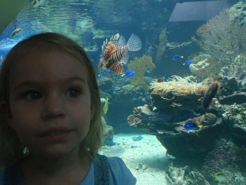 ulyssia aquarium noumea