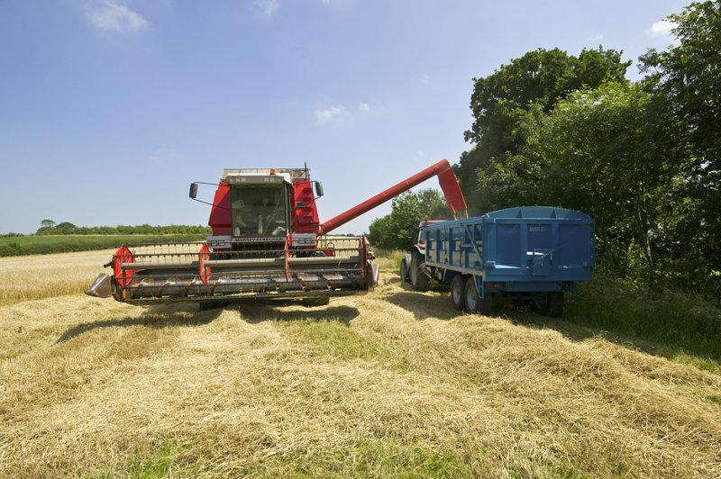 Unloading the Grain