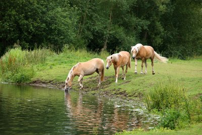 You can lead a horse to water but !!!!