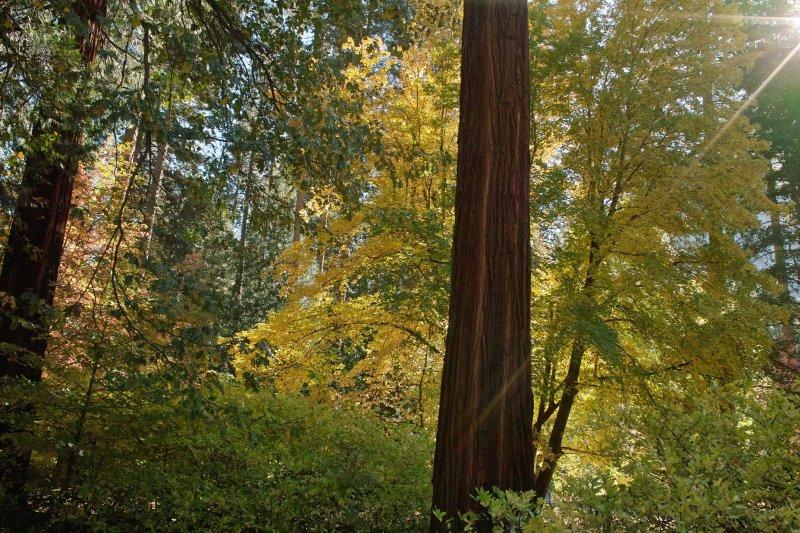 fall color Yosemite 3.jpg