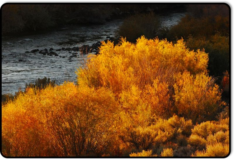 Along the East Walker River