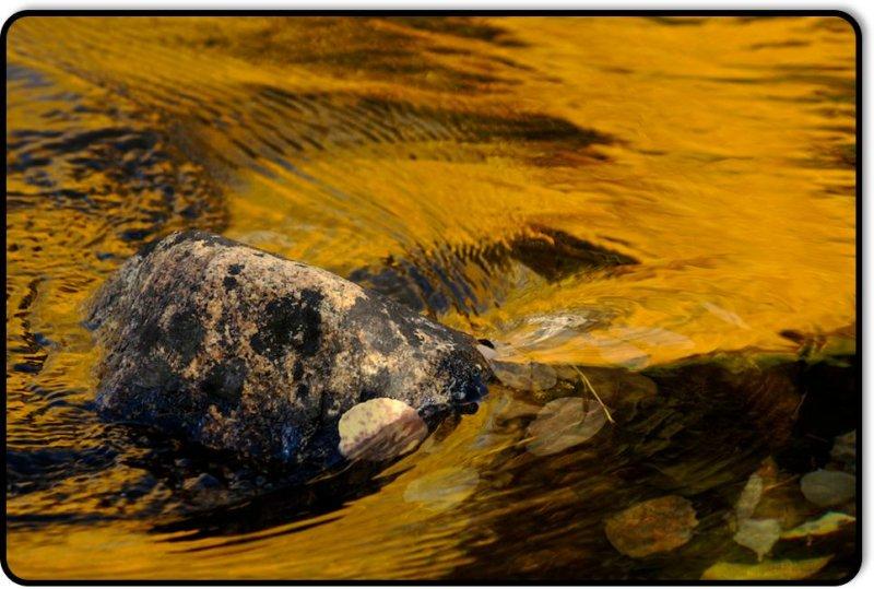 Leaf, Rock, Water, Reflection - June Lake Loop