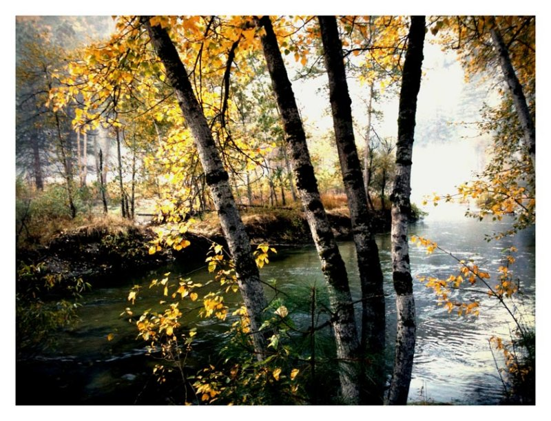 Along the Banks of the Merced River, Yosemite