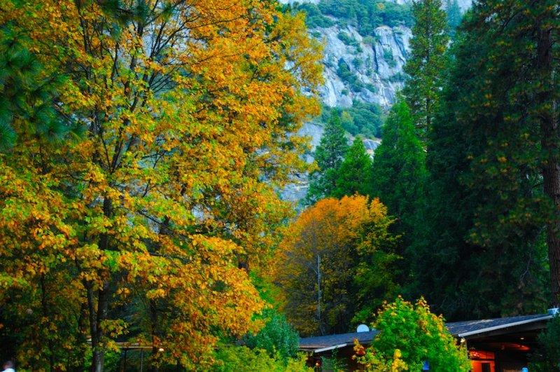 At Yosemite Lodge