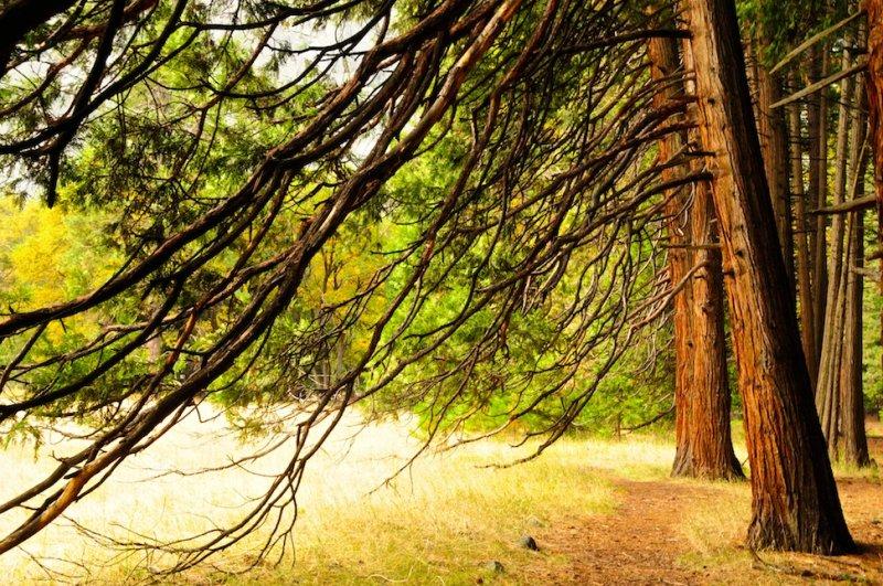 Edge of Stoneman Meadow