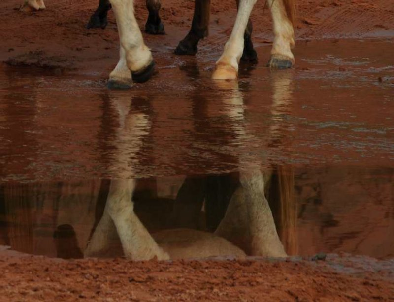 Reflections at Sand Creek, Monument Valley