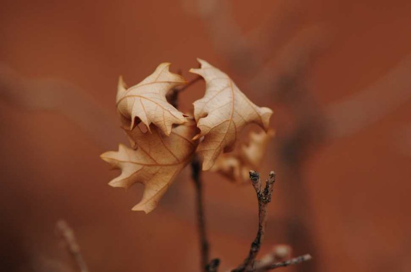 Leaves, Arches National Park