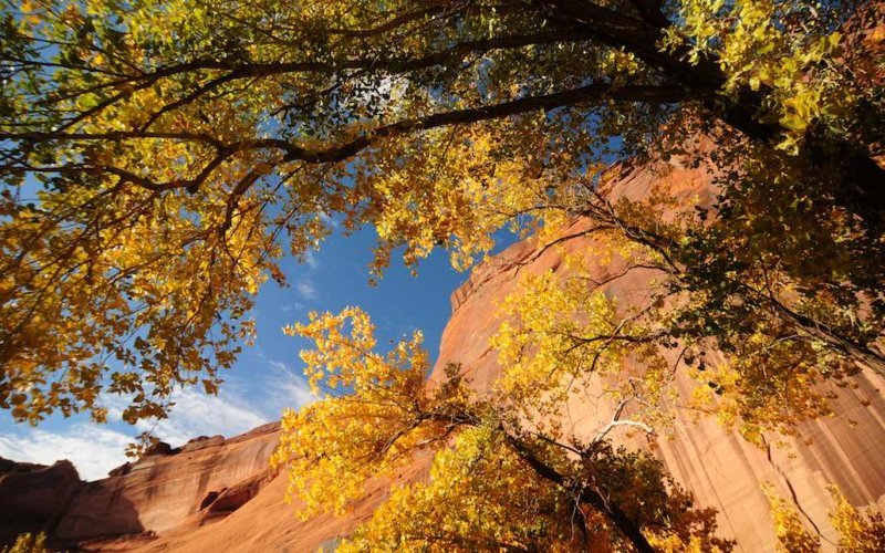 In Canyon de Chelly National Monument, Arizona
