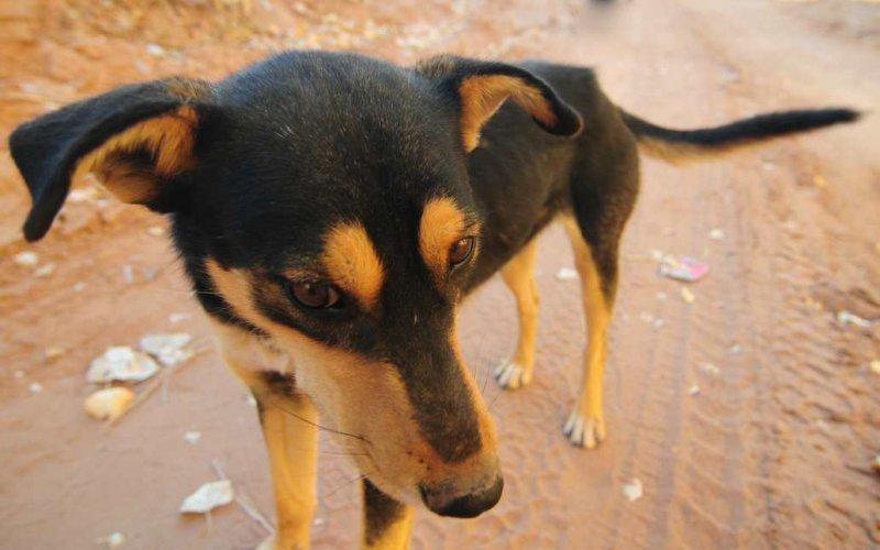 Friendly Dog, Canyon de Chelly