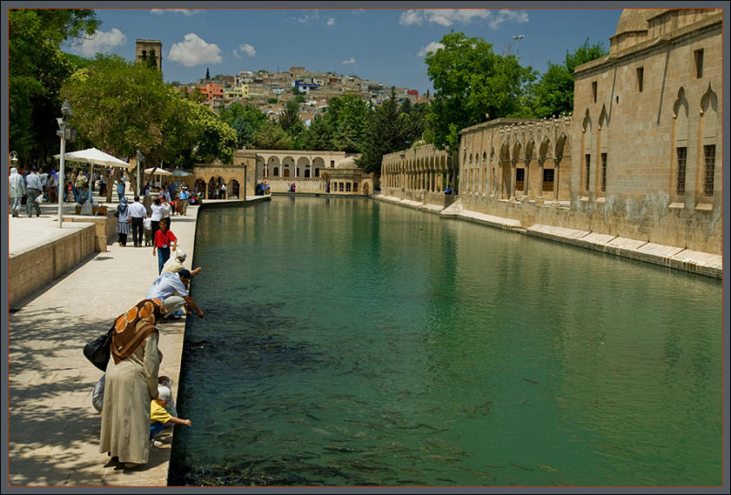 Sanliurfa, the sacred carp pond of Abraham