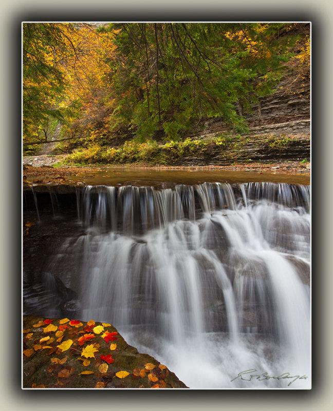 Fallen Leaves By Waterfall