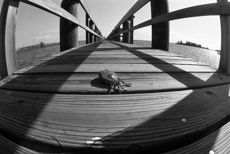 Crab & Dock