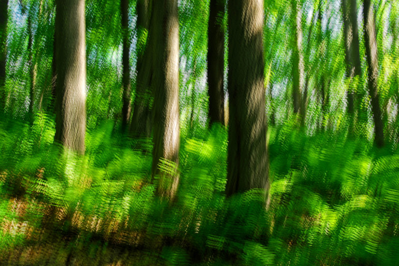 Summer forest mood