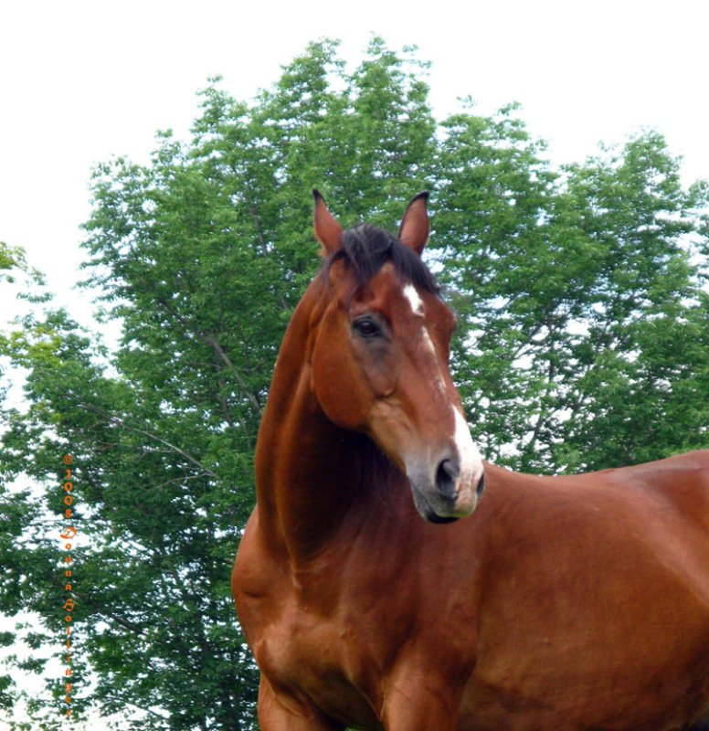 Lovely Brown Gelding