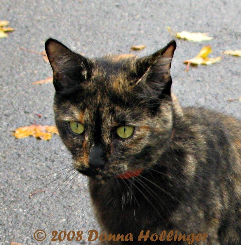Pisa Kitty