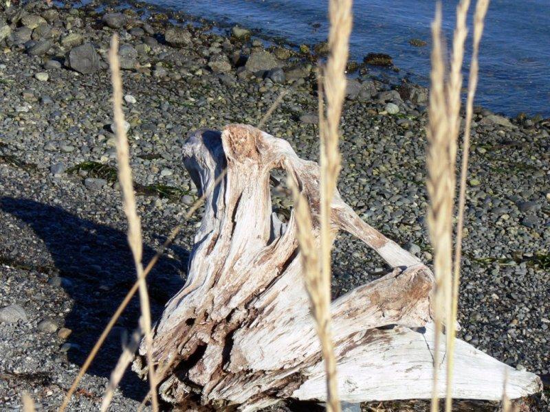 Driftwood at Whiffen Spit near Sooke (Tsou-Ke)