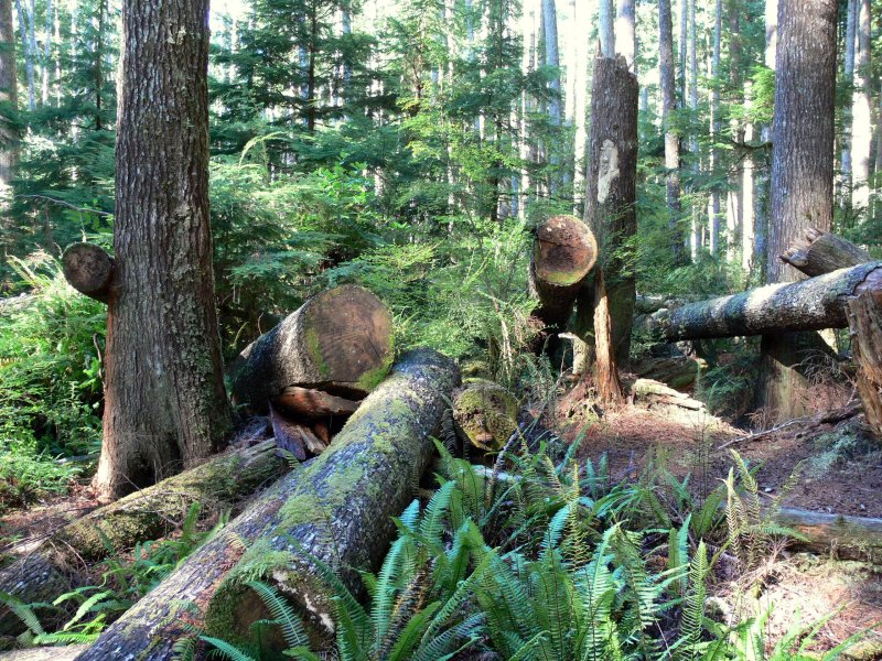 On the trail to China Beach, near River Jordan on the west coast of Vancouver Island