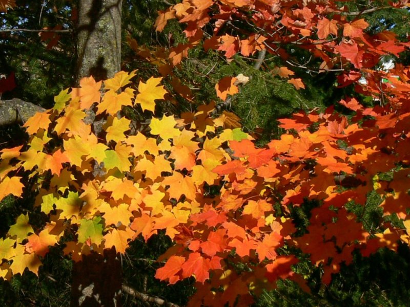 The colours of fall....