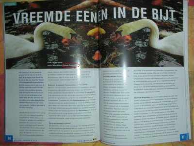 Netherland magazine Koi Vitzer