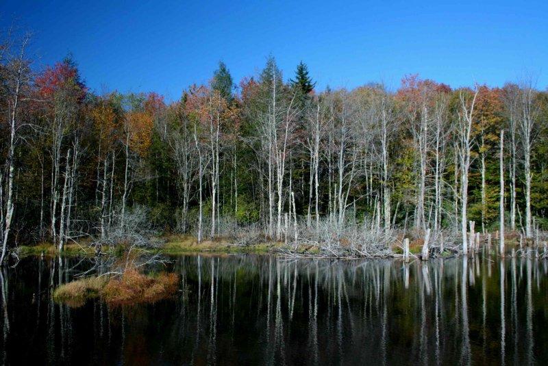 Reflections in Autumn Beaver Pond tb1003nnrx.jpg
