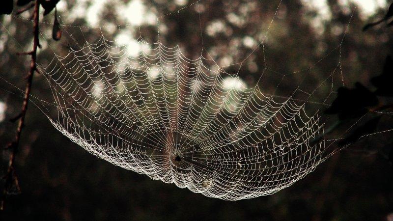Spider Webs 024.jpg
