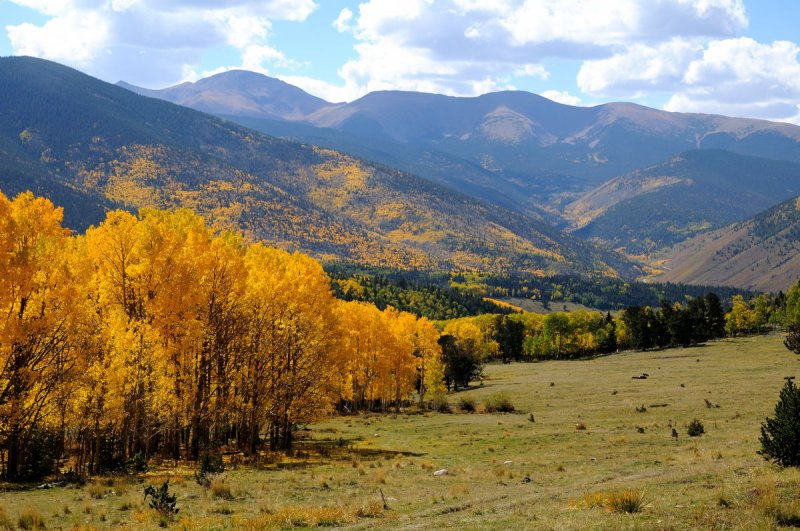 Fall Colors near Cuchara Pass CO