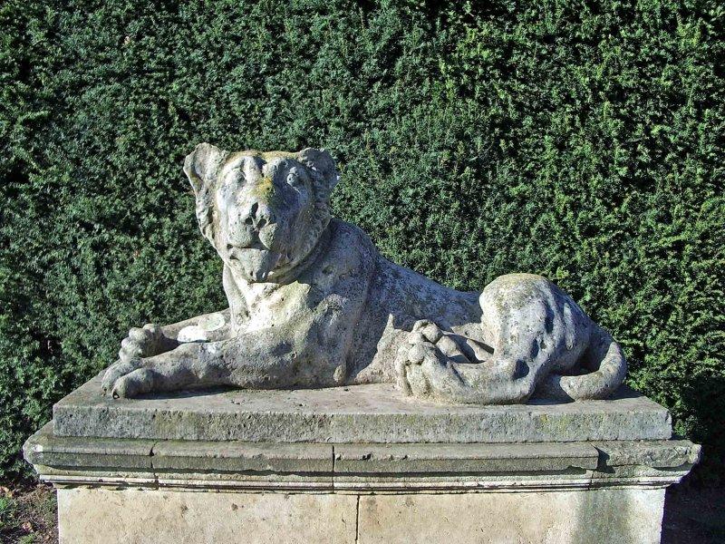 Dozy looking lion