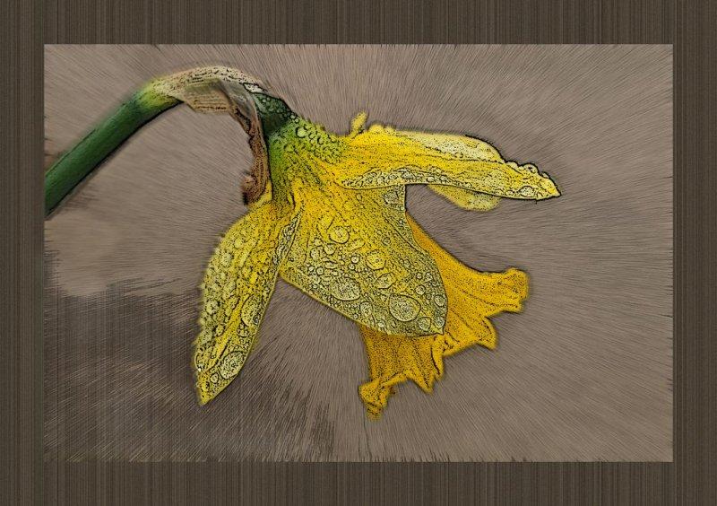abstractflower 408_tn.jpg