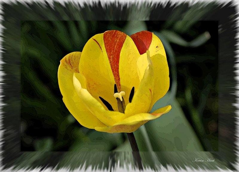 flowerabstarct 4 2008_tn.jpg