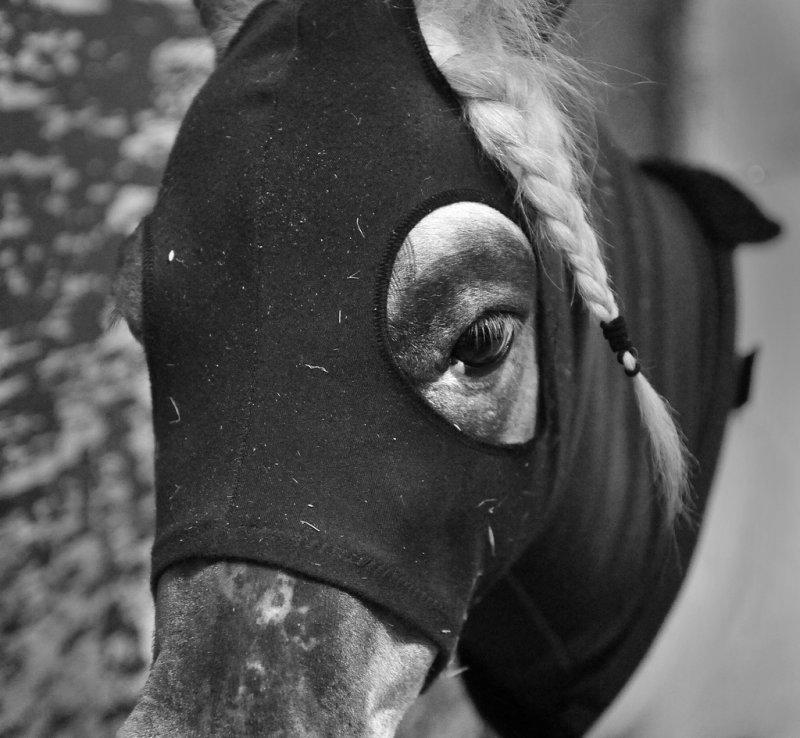 horse1_tn.jpg