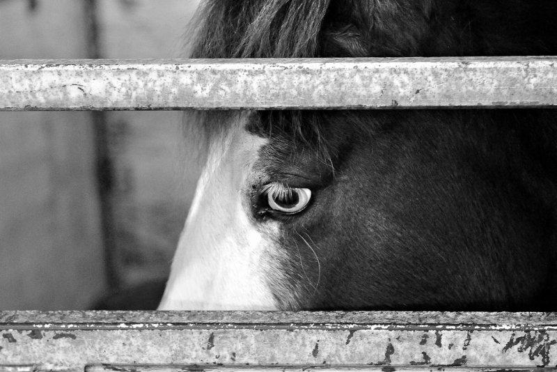 Horse eye bw_tn.jpg