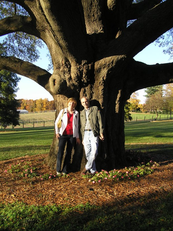 One Really Big Tree