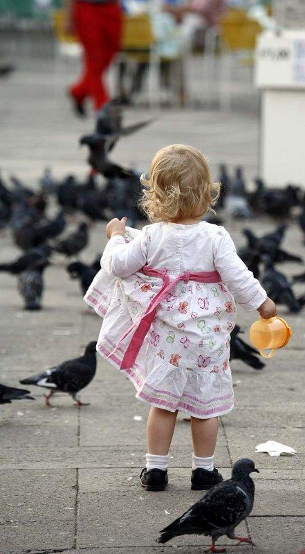 Fearless pigeon hunter