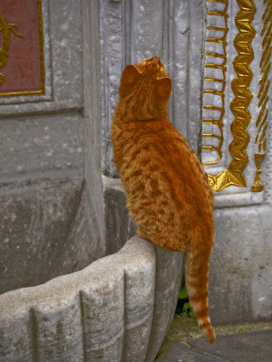 Top cat, Library of Amet III, Topkapi Palace, Istanbul, Turkey, 2009