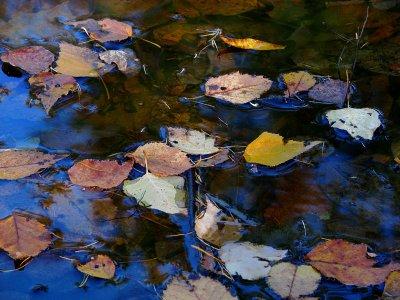 les feuilles flottantes
