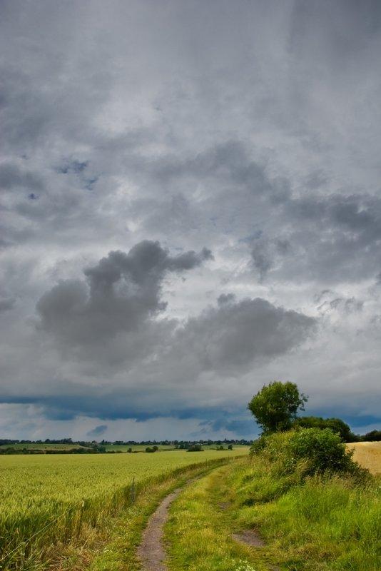 Summer Rain 1