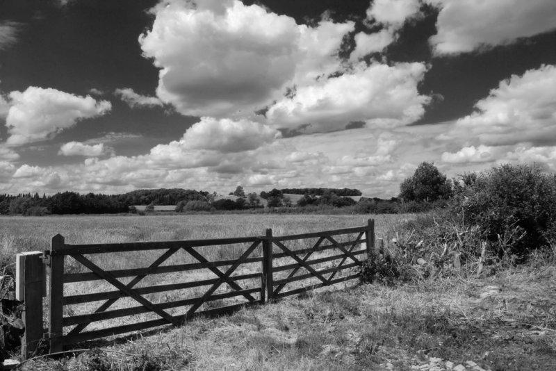 Gate & Meadow