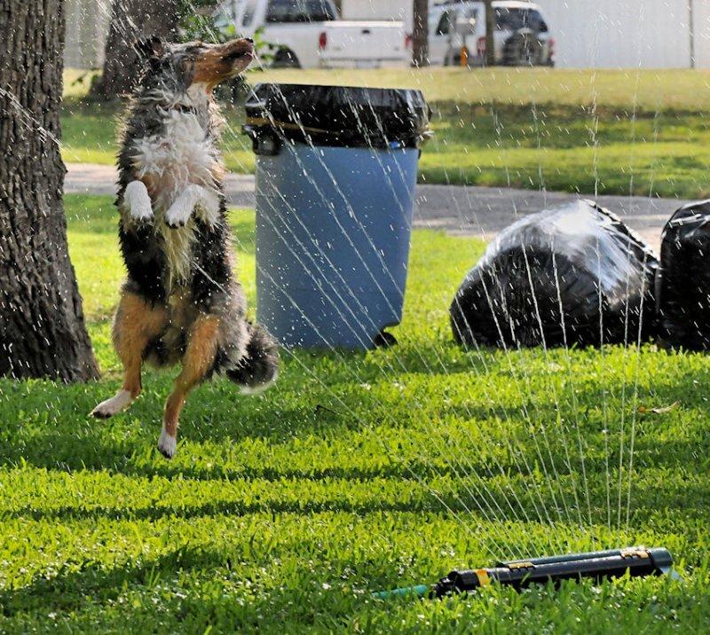 Crazy bout that sprinkler