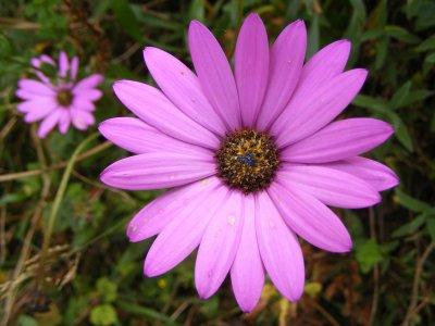 flowers   (By Julie)