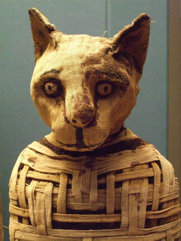 The mummified cat was wrapped in woven linen